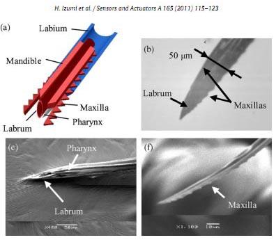 mosquito-needle